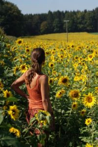 nearby sunflower field for testing the bokeh of vintage lenses